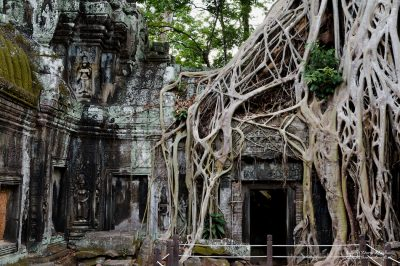 """Marked on the map as """"Tomb Raider Tree"""""""